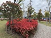 练塘镇海阳九峰养护院 图片